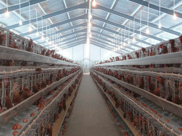 China PVC Down Pipe Poultry Farm Structure Chicken Shed With Grey paint Surface distributor