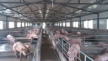 China H Section Steel Poultry Farm Structure With Galvanized C Purlins For Pig Sheds distributor
